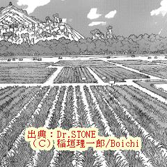 ドクターストーン91ネタバレ感想:食料王に俺はなる!農業・小麦作り開始